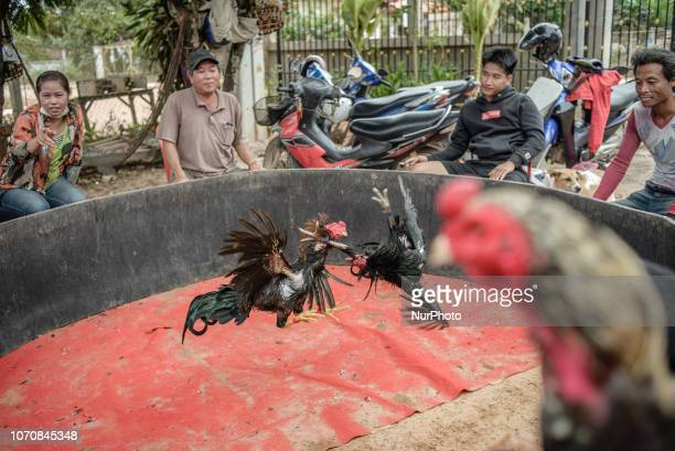 Traditional cock fighting in a village near Vientiane Laos on December 9 2018