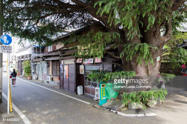 A Traditional Corner-Shop General Store and Bakery Next to a 90 Year old Himalayan Cedar Tree in Old Yanaka Neighbourhood, Tokyo, Japan.