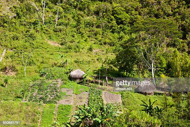 Traditional Dani Village at Baliem Valley West Papua Indonesia