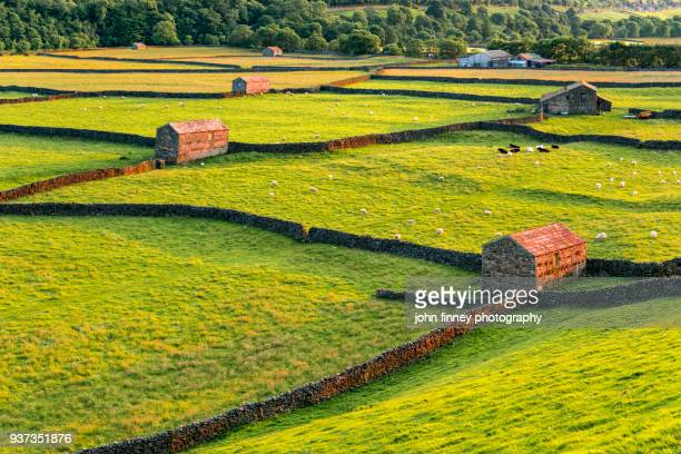 Traditional dry stone walls and barns near Gunnerside in the Yorkshire Dales.