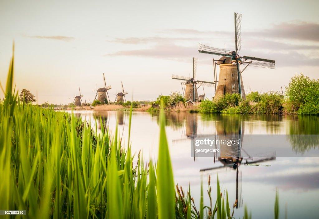 Traditional Dutch windmills at Kinderdijk : Stock Photo