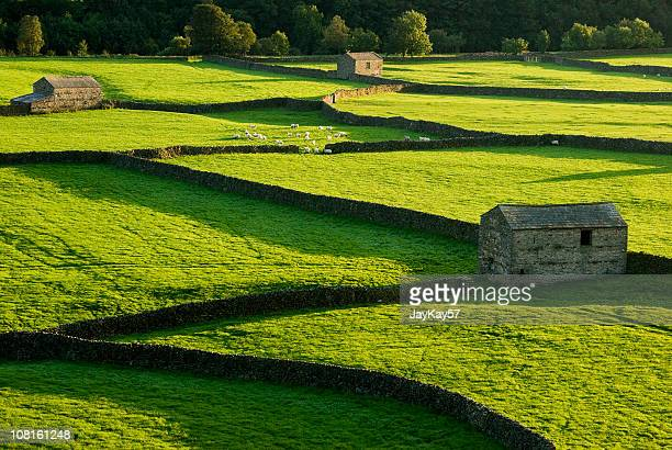 traditional farm and barns in england - yorkshire england stock pictures, royalty-free photos & images