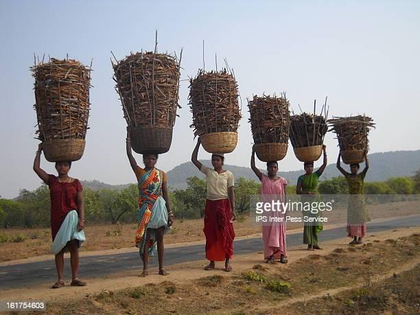 Traditional Farming Holds All the Aces By Manipadma Jena KORAPUT, India, January 29, 2013 . Last monsoon season Sunadhar Ramaparia, a member of the...