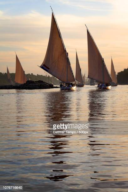traditional feluccas on nile - dietmar temps stock photos and pictures