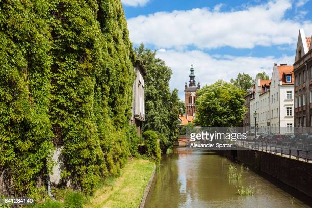 traditional historic houses covered with ivy on a canal in the old town of gdansk, poland - gdansk stock pictures, royalty-free photos & images