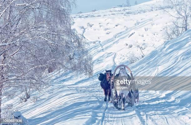 traditional horse transport on the village with sleigh - russische kultur stock-fotos und bilder