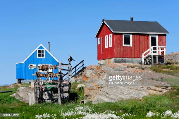 Traditional houses from Ilimanaq a settlement in the Qaasuitsup municipality in western Greenland In front of the house fish is dried in the sun