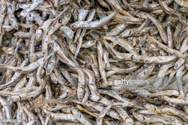 Traditional Japanese Food, full frame of small dried fishes