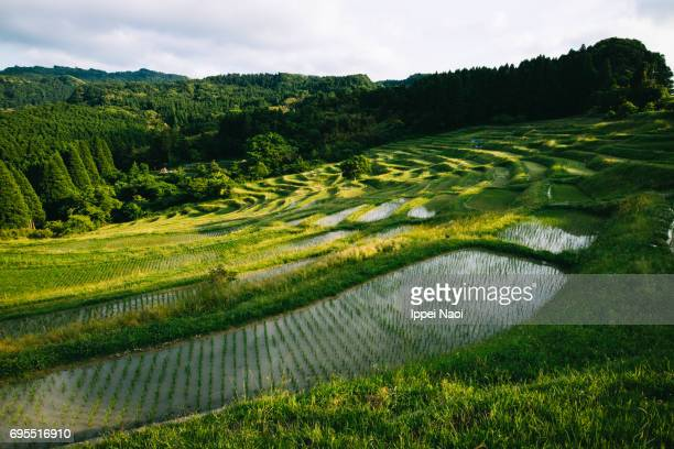 traditional japanese rice terrace, chiba - chiba city stock pictures, royalty-free photos & images