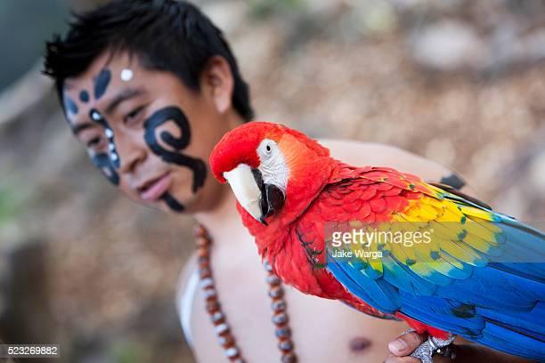 traditional mayan performer - jake warga fotografías e imágenes de stock