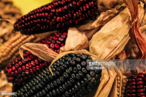 Traditional Mexican red and black maize(corn) species, Mexico City, Mexico
