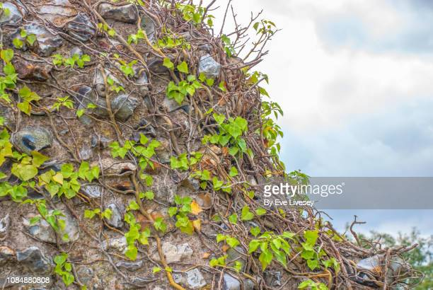traditional norfolk old flint wall - chert stock photos and pictures
