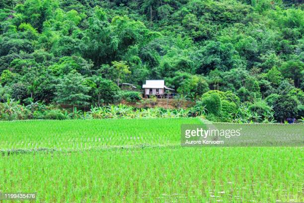 traditional rice terraces in mai chu valley in north vietnam - mai chau stock pictures, royalty-free photos & images