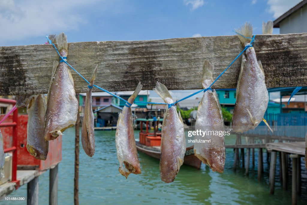 Traditional salt dried fish hanging and drying under the sun : Stock Photo