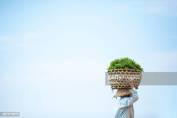 traditional seaweed farmer, indonesia - seaweed stock pictures, royalty-free photos & images