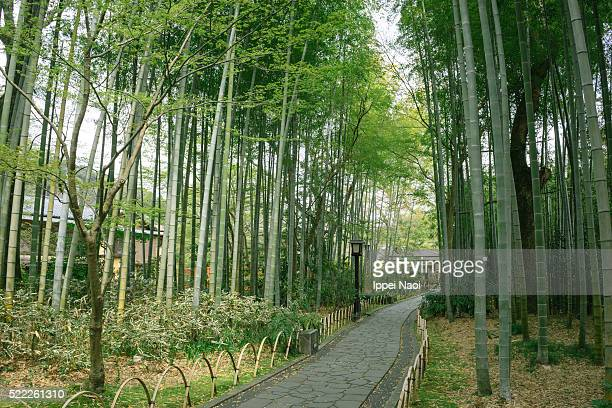 Traditional stone path in bamboo grove, Japan