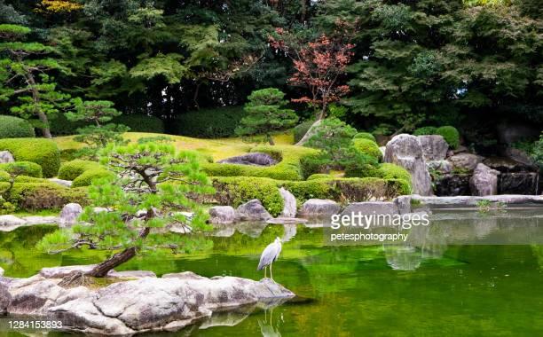 伝統的なスタイルの日本庭園と池と鯉 - 福岡県 ストックフォトと画像