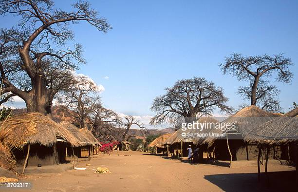 Traditional thatched houses and baobabs