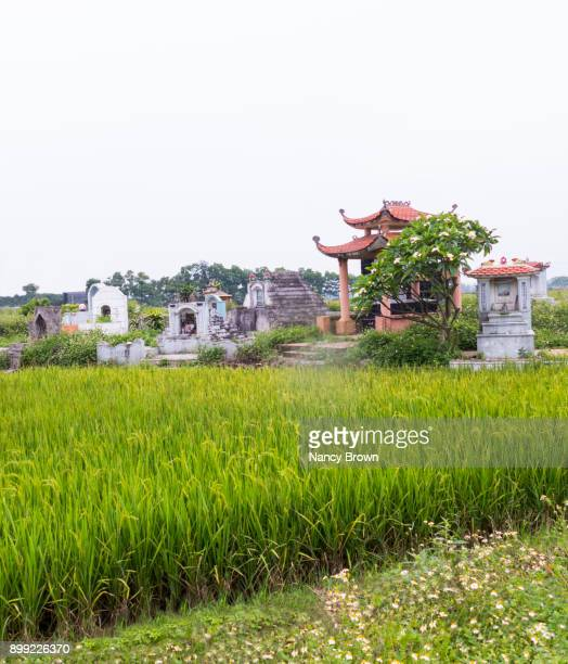 traditional vietnamese buddhist cemetery in rice field in vietnam. - nancy green stock pictures, royalty-free photos & images
