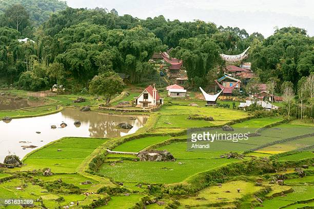Traditional village and green rice terraces