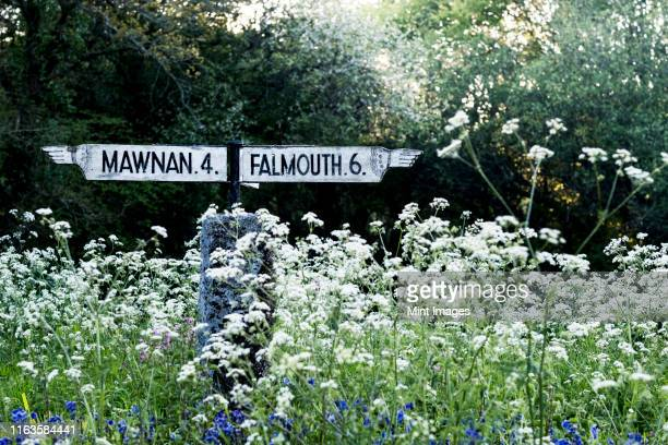 traditional white signpost to mawnan and falmouth in cornwall surrounded by white and blue wildflowers. - ファルマス ストックフォトと画像