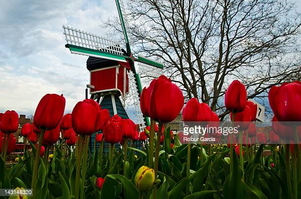 traditional windmill - rolour garcia stock pictures, royalty-free photos & images
