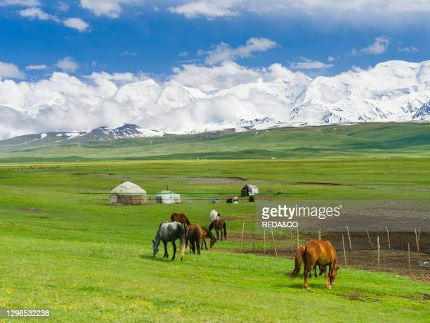 Traditional yurt in the Alaj valley with the Transalai mountains with Pik Kurumdy in the background. The Pamir Mountains. Asia. Central Asia....