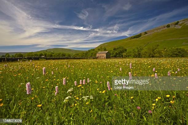 Traditionally farmed haymeadow near Muker in Swaledale.