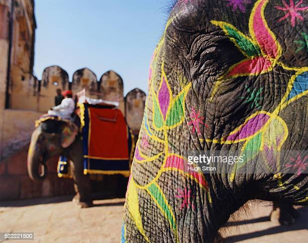 traditionally painted elephant at the amber fort - hugh sitton stock pictures, royalty-free photos & images
