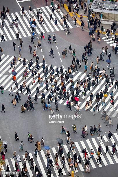Traffic crossing.