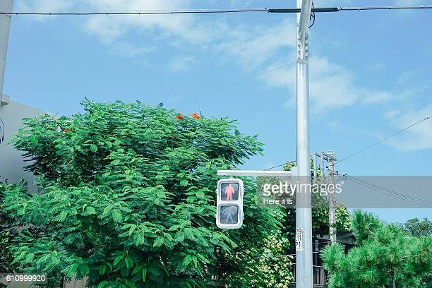 traffic light - 交通信号機 ストックフォトと画像