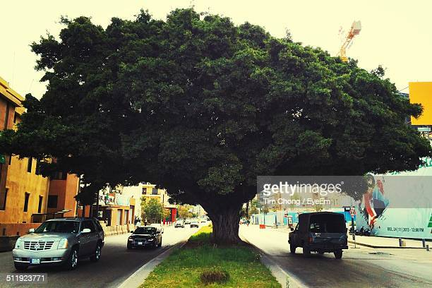 traffic on road - banyan tree stock photos and pictures