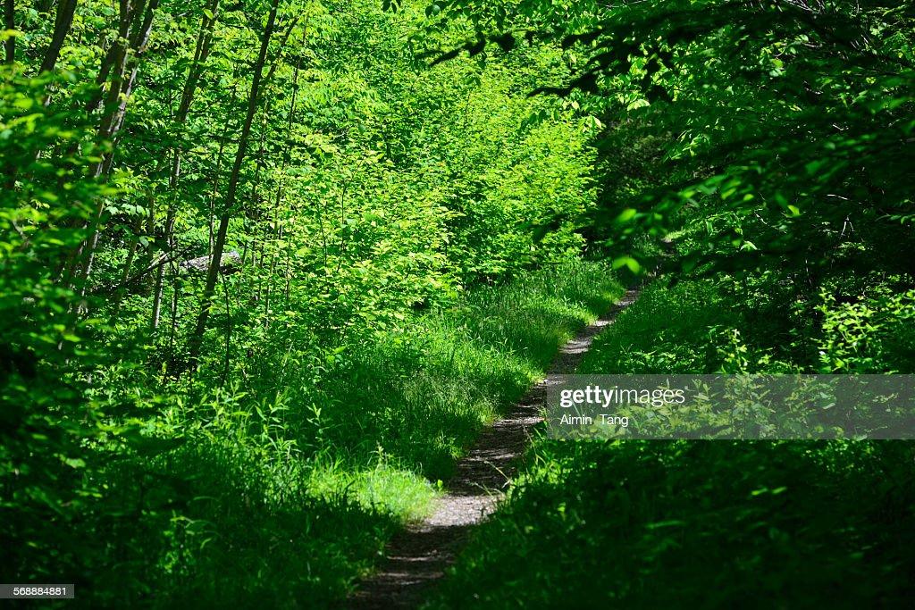 Trail along Douglas Falls in West Virginia : Stock Photo