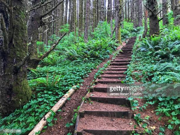 trail amidst trees in forest - steep stock pictures, royalty-free photos & images