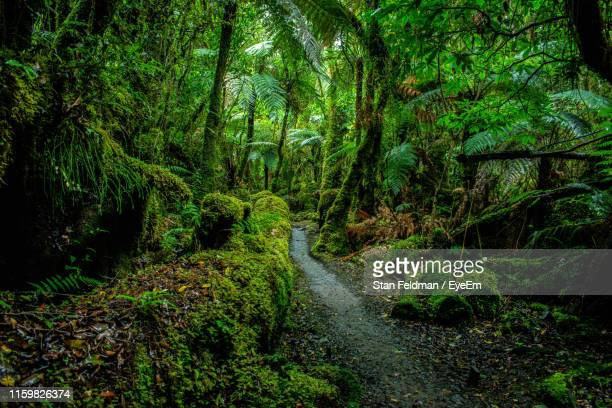 trail amidst trees in forest - rainforest stock pictures, royalty-free photos & images