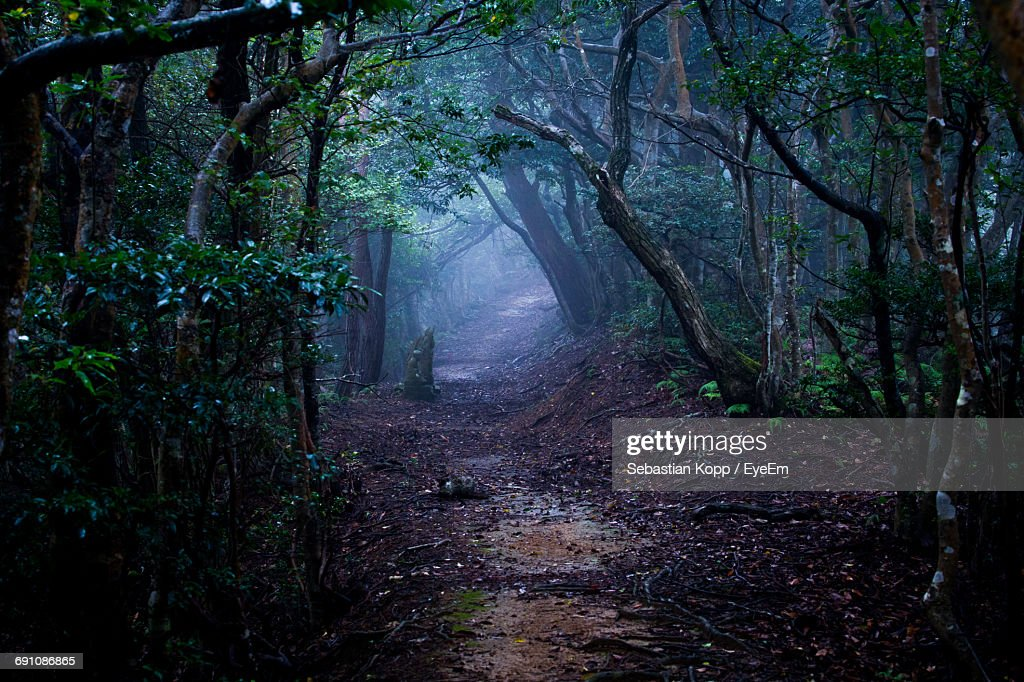 Trail Amidst Trees In Forest : Stock Photo