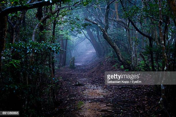 trail amidst trees in forest - fairytale stock pictures, royalty-free photos & images
