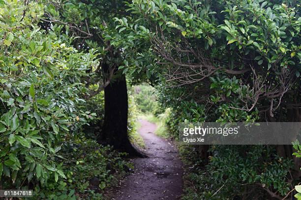 trail and tree - liyao xie fotografías e imágenes de stock