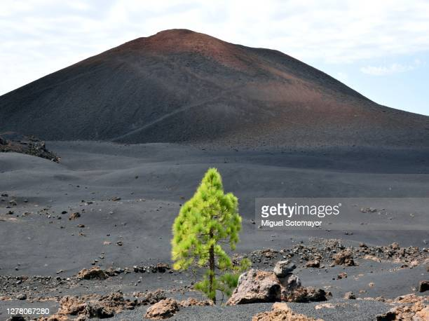 trail around the chinyero volcano - el teide national park stock pictures, royalty-free photos & images
