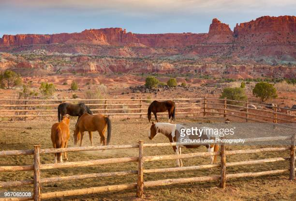 Trail Horses Ready for a Ride in the Capitol Reef National Park, Utah.