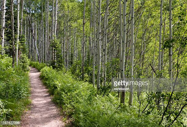 trilha em aspen floresta - steamboat springs colorado - fotografias e filmes do acervo