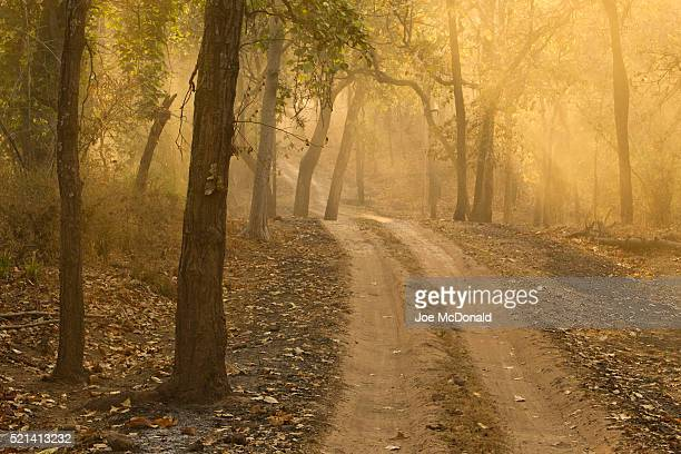 trail in bandhavgarh national park - bandhavgarh national park stock pictures, royalty-free photos & images