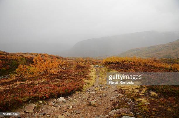 Trail in foggy mountain area