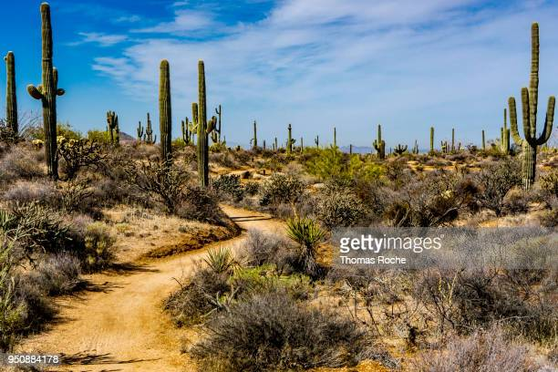a trail in the desert - sonoran desert stock pictures, royalty-free photos & images