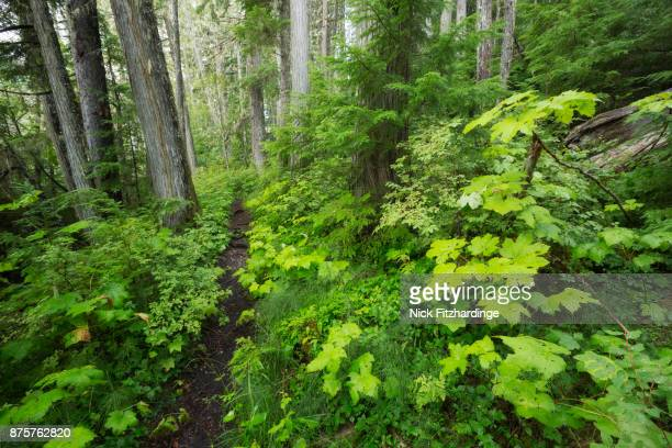 A trail in the forest on the edge of Clearwater Lake, Wells Gray Provincial Park, British Columbia, Canada