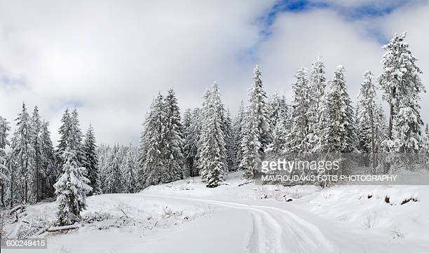 trail in the snow - country christmas stock pictures, royalty-free photos & images