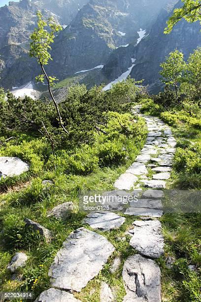 Trail in Zakopane national park