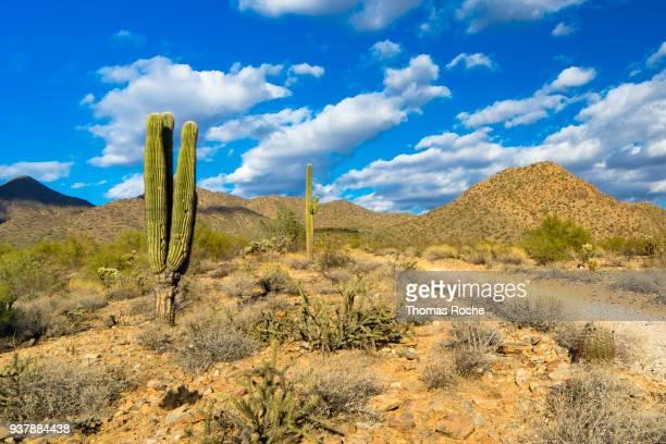 a trail into the arizona desert - desierto sonorano fotografías e imágenes de stock