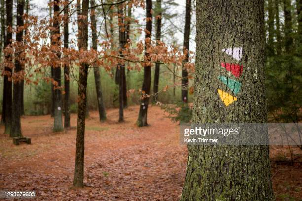 trail markers on tree in forest - トレイル表示 ストックフォトと画像
