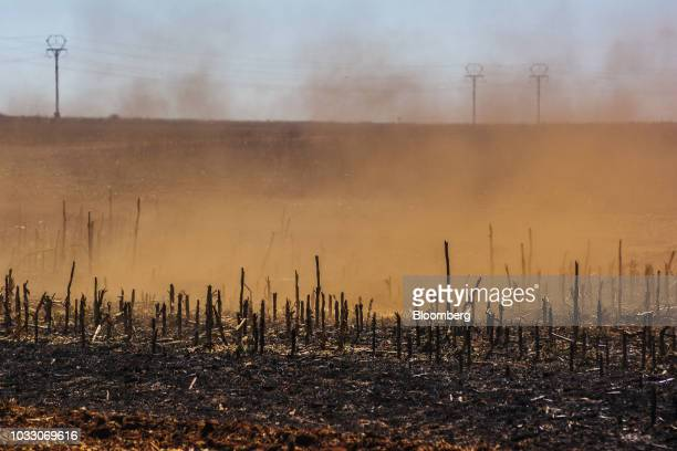 A trail of dust sits in the air as a tractor ploughs ground through a harvested corn field on the Ehlerskroon farm outside Delmas in the Mpumalanga...